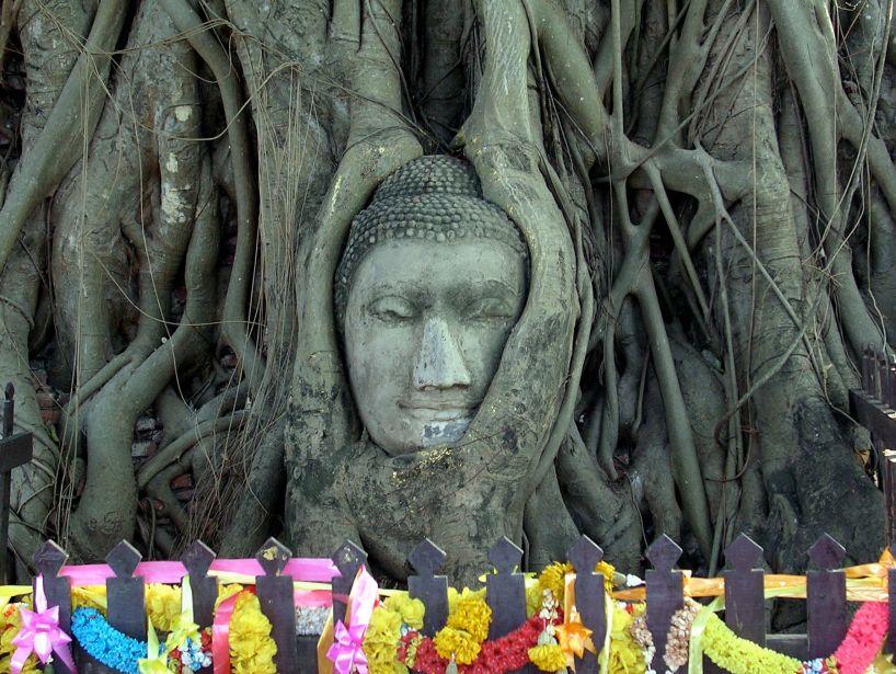 banyan buddha 1